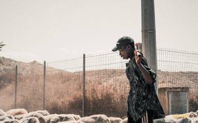 Il pastore - Assemini