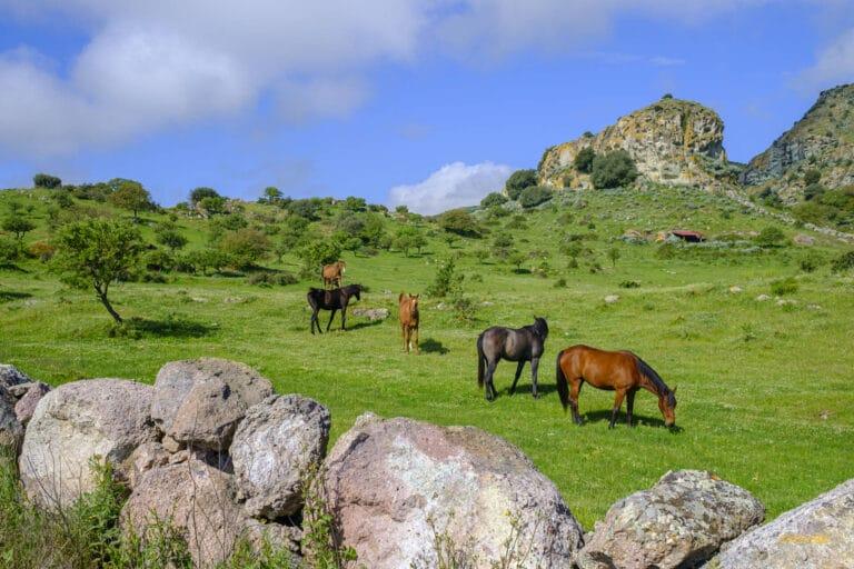 Cavalli di Giave